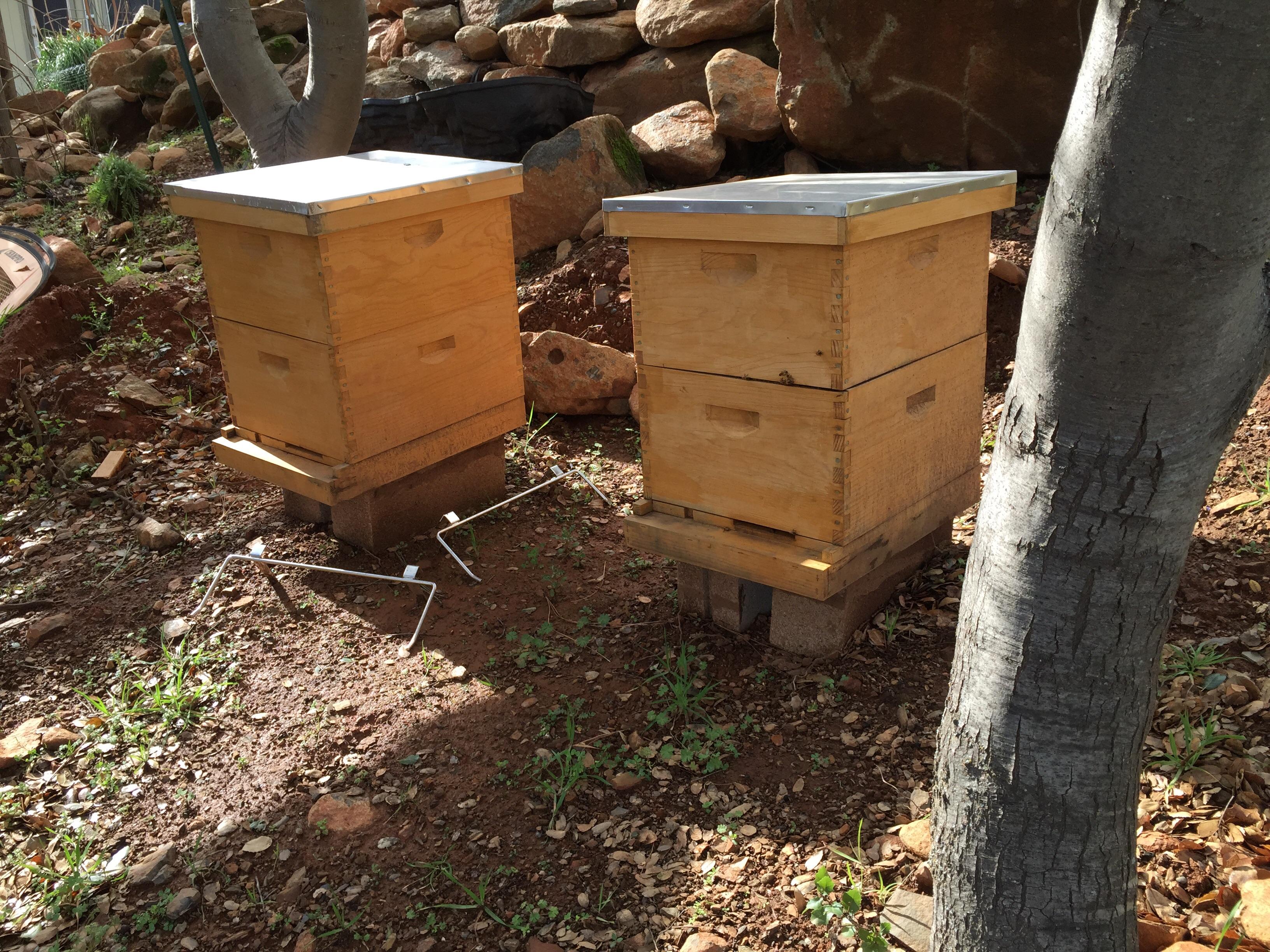 honey beesspirit winds farm spirit winds farm